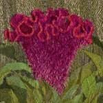 Celosia cristata; Susan Vida Judah